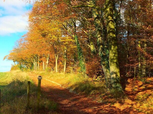Autumn at Braziers